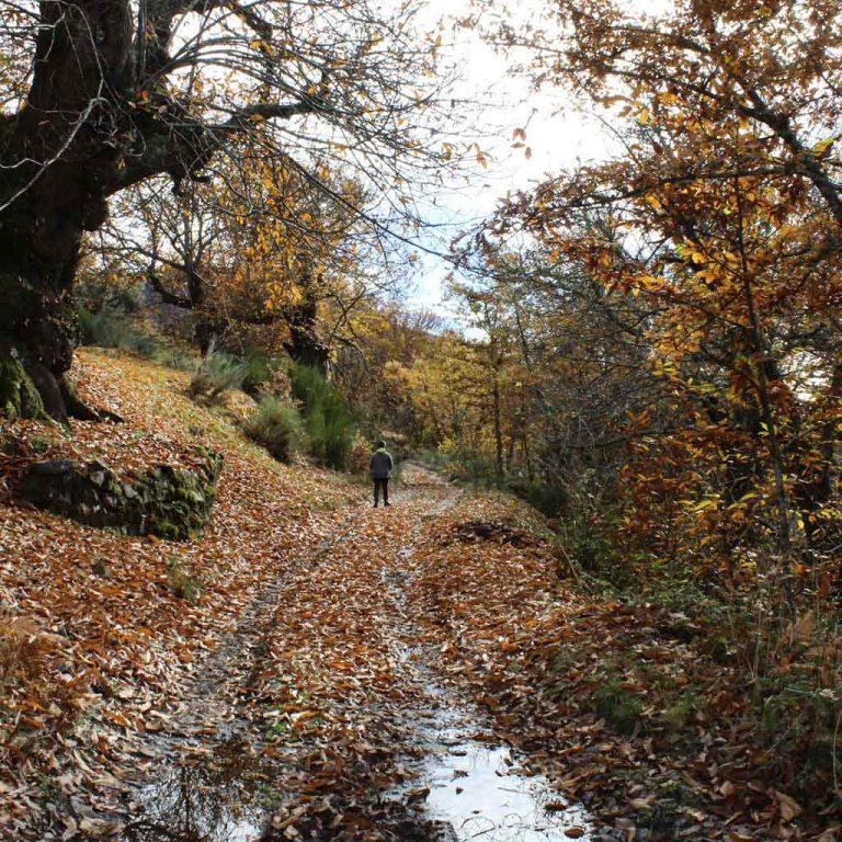 Casa Rural El salgueiro ancares burbia senderismo naturaleza